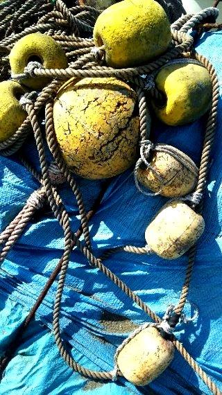 写真・黄色い浮き.JPG