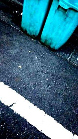 写真・ゴミ箱と白線.jpg